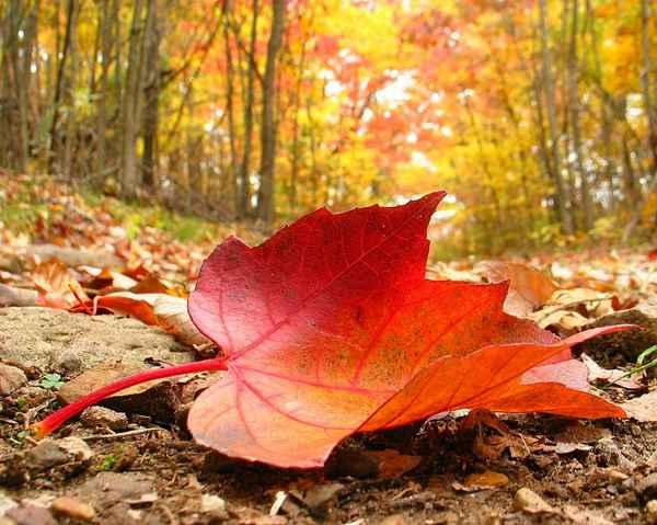 برگ پاییزم که می افتم به پای دیگران